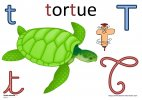 t-tortue